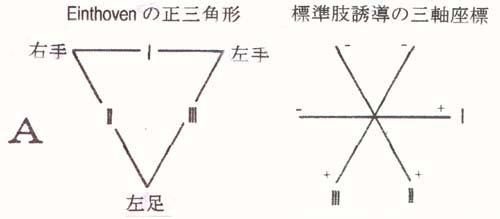 の アイン 三角形 トーベン 標準12誘導の誘導部位と電極の極性 of